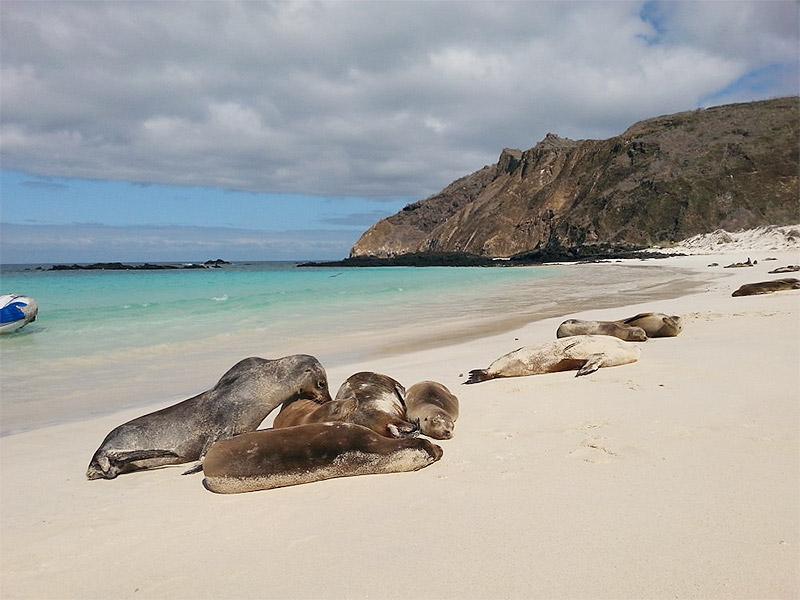 Ecuador Galapagos Islands San Cristobal Ayni Peru
