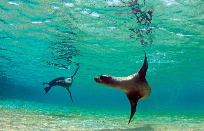 Galapagos Islands Extension