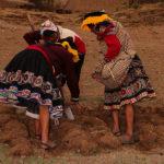 Peru Agricultural Calendar 2